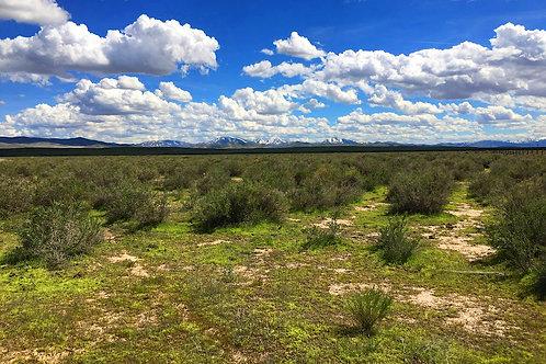 003-451-07 / 10.00 Acres in Eureka County, Nevada