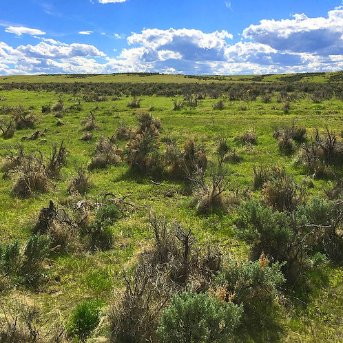 003-472-04 / 20.51 Acres in Eureka County, Nevada