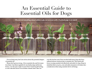 An Essential Guide to Essential Oils for Dogs