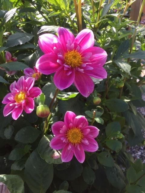 00_Butterfly roze.jpg
