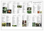 9 Overzicht planten voor zintuigen .jpg