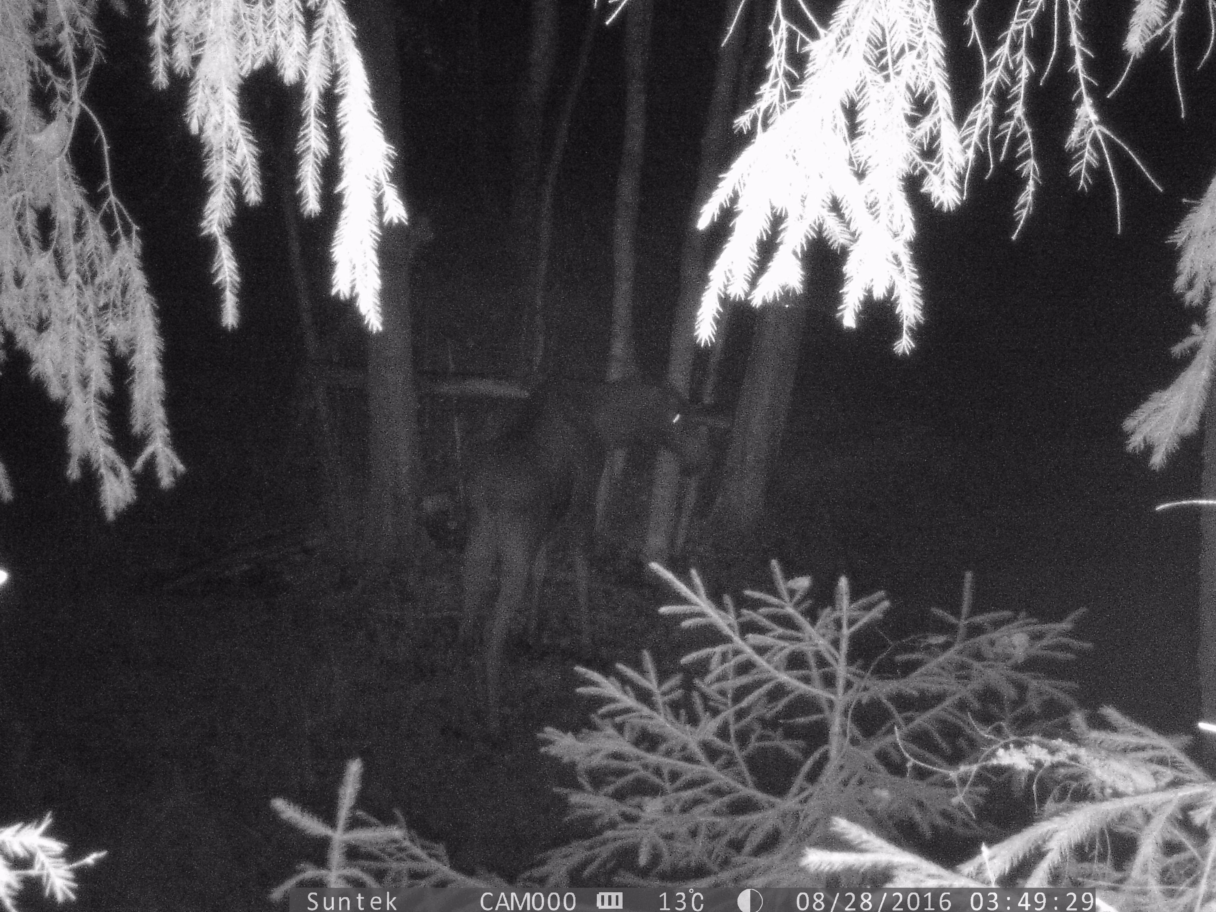 Работа лесной камеры suntek