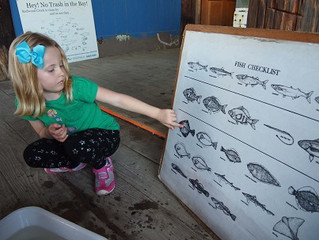 Afternoon Ecology: Week 4, Fish: Just keep swimming, from bay to ocean