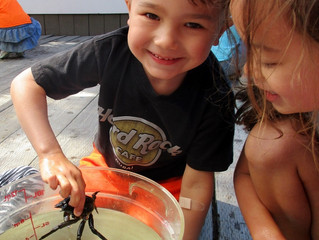 Marine Science Camp 2017: Camp dates announced!