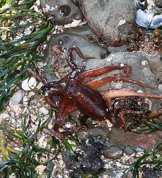 octopus 2.jpg