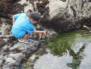 Making A Splash at Marine Science Camp