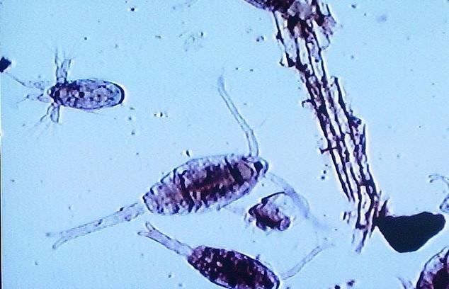 plankton%202%20(800x600)_edited.jpg