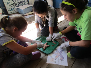 Marine Science Camp: Take a dip into summer planning