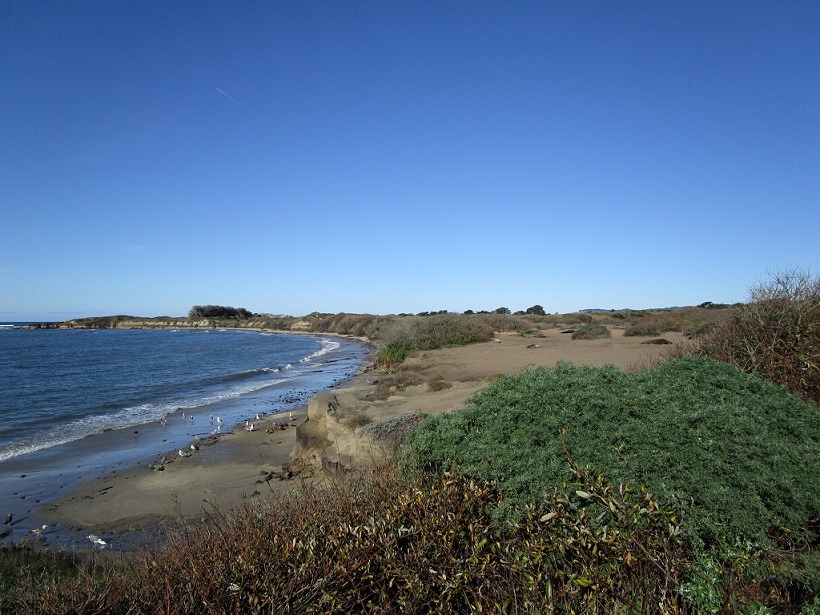 Breeding beach