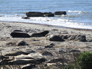 Marine Science Camp 2017: Elephant seals galore
