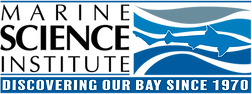 DISCOVERING OUR BAY SINCE 1970.png
