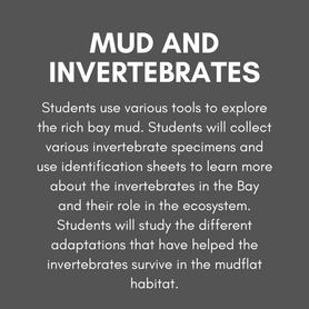 Mud and Invertebrates (1).png