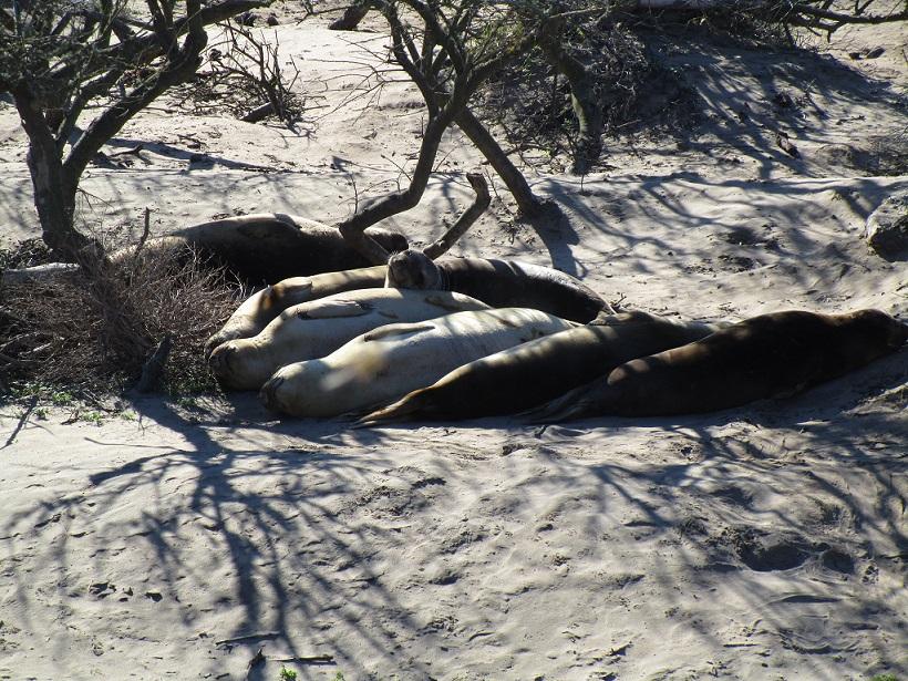 Napping seals
