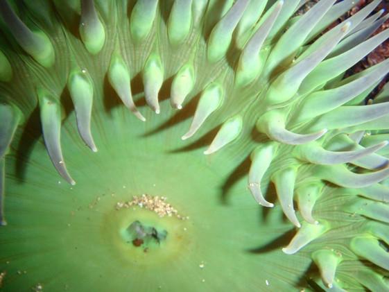 cnidaria (800x600).jpg