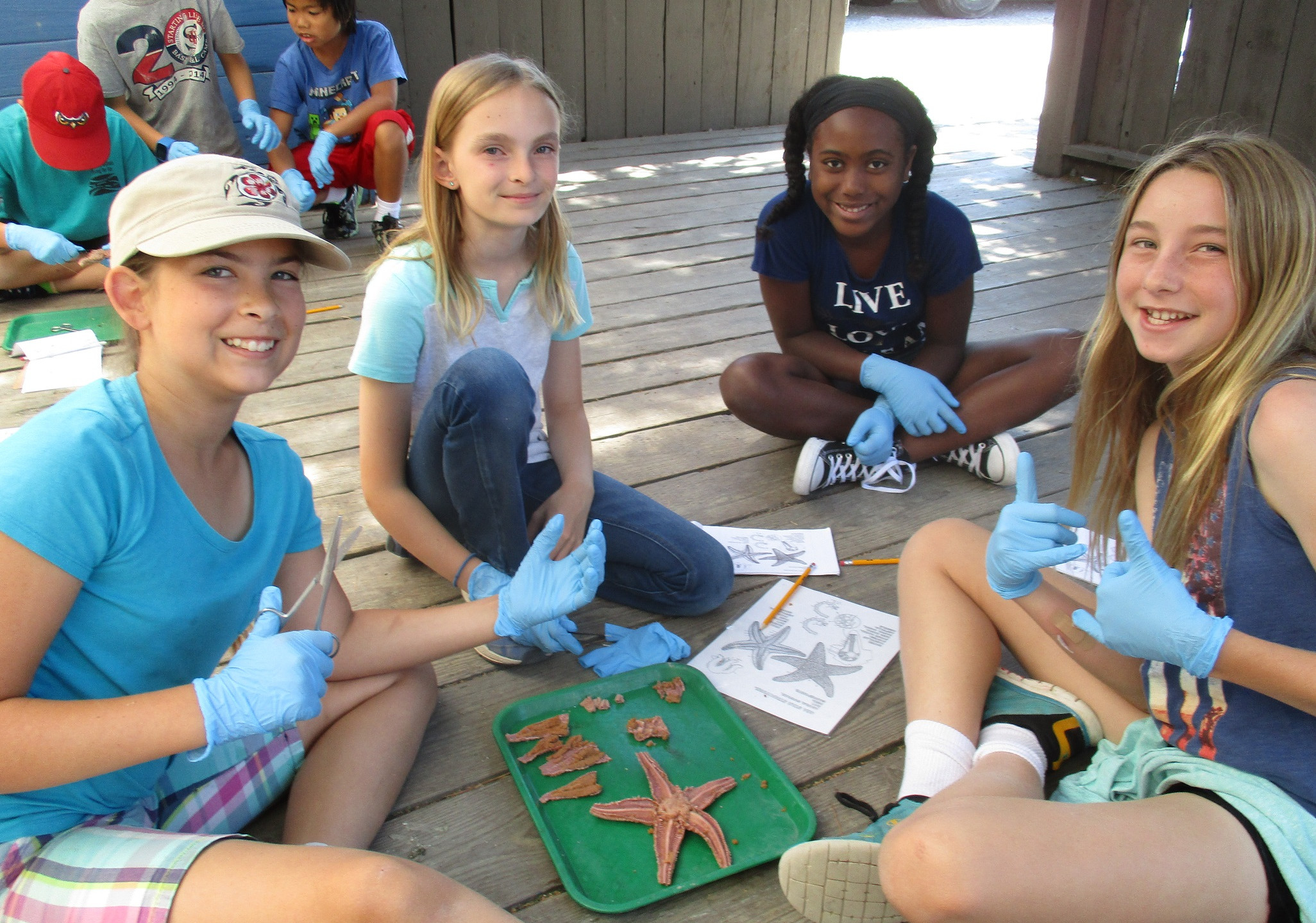 Sea Star Dissection