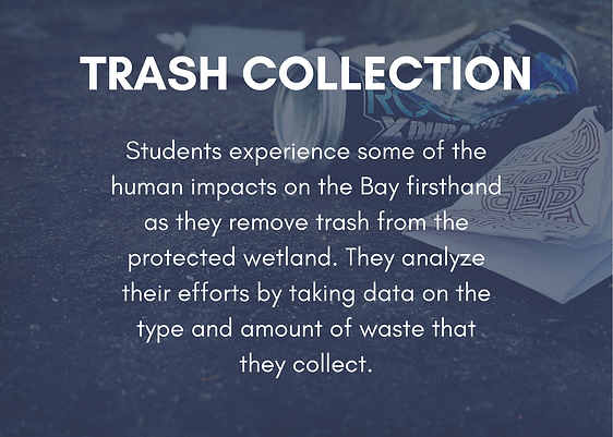 Trash Collection (1).png