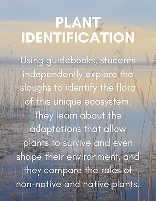 Copy of Plant Identification.png