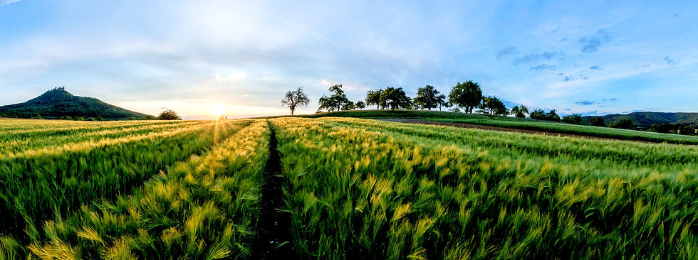 Agronegócio, agricultura, agro
