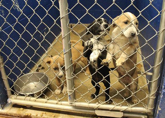 The kennels 5 sm.jpg