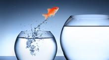 """מה צריך מנכ""""ל ובעל חברה לדעת כדי לייצר את השינוי העסקי המיוחל להצלחה? איך לבחור יועץ נכון?"""