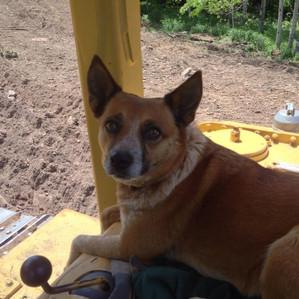 Miss Abby dog