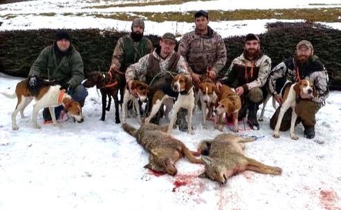 Coyote Hunt 2020