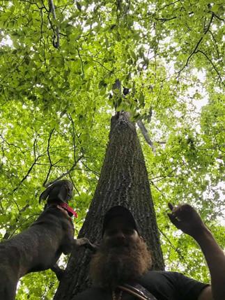 Bear Treed