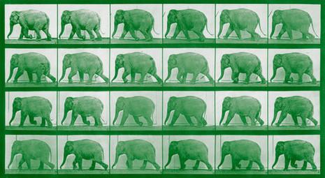 'Elephants'