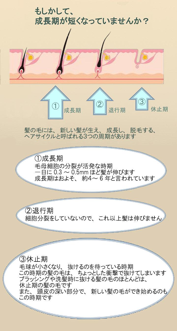大阪大東住道・発毛・育毛・薄手のメカニズム