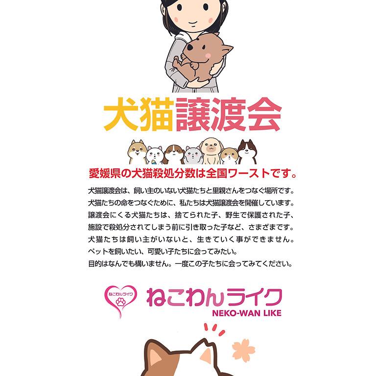 犬猫譲渡会(ねこわんライク)
