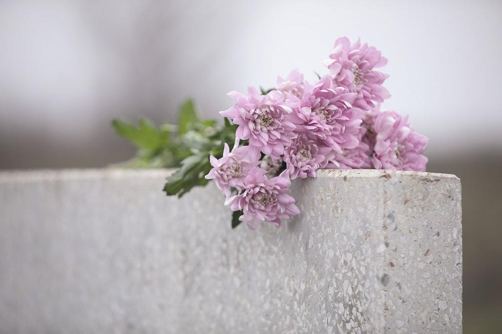Chrysanthemum%20flowers%20on%20light%20g