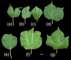 תמונות מעובדות למאמר מדעי