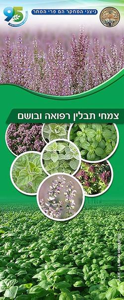 עיצוב רול אפ צמחי תבלין