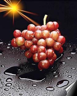 פוסטר ענבים