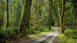 פוסטר תמונת נוף שביל ביער