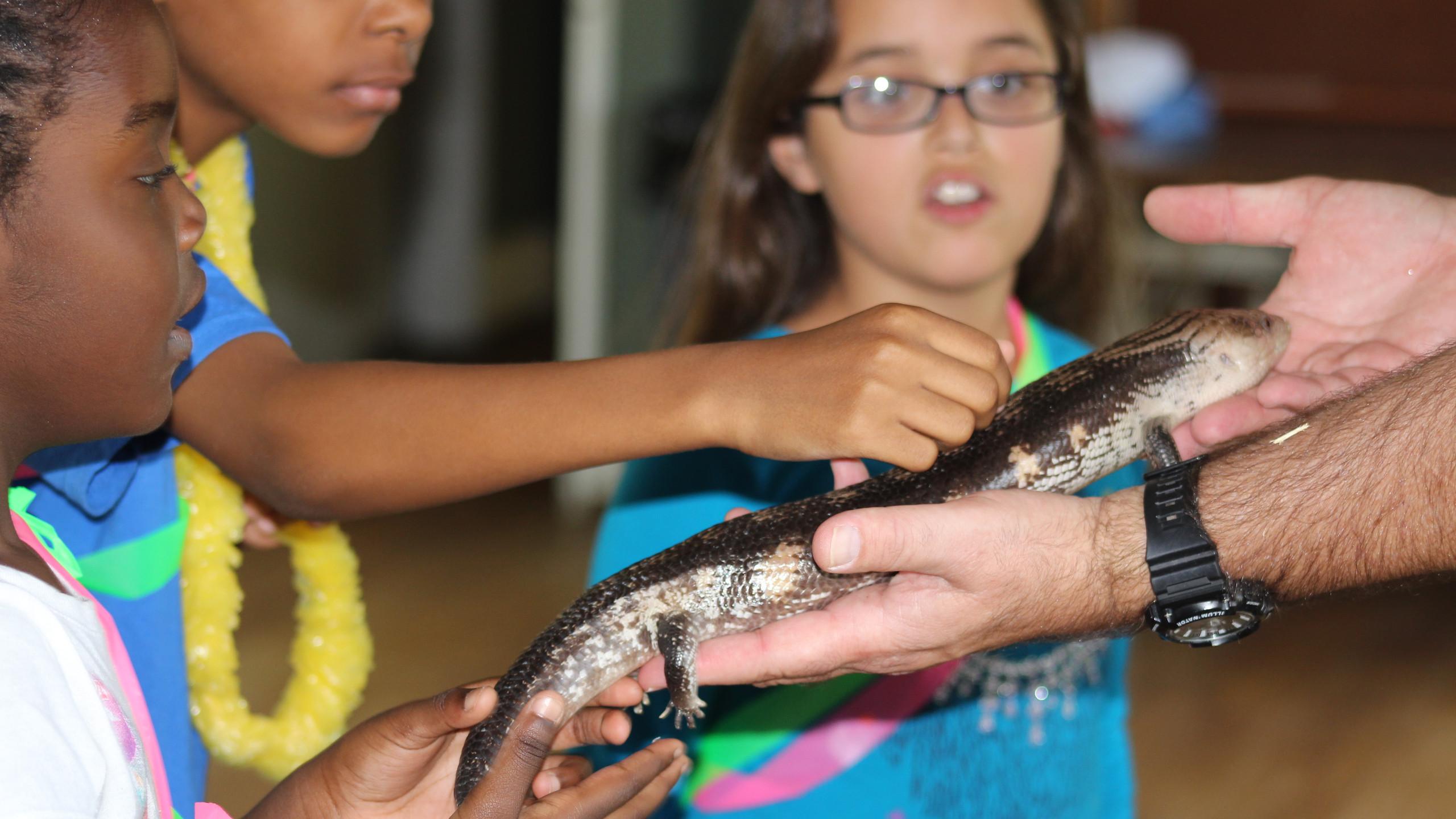Lizards in the reptile zoo