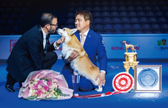 Best In Dog Show 2019