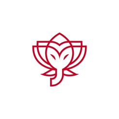 Elephant Lotus