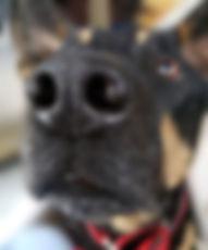 Baron-Nose2-web.jpg