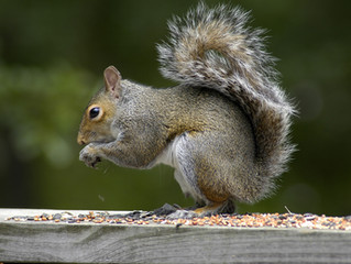 Squirrel Busting: Is it Really Possible?