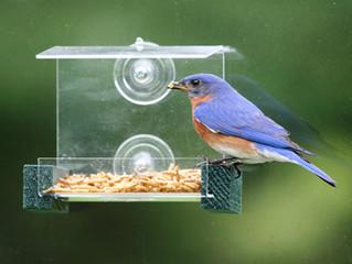 Bird Feeding - A Window Feeder Brings Them Up Close