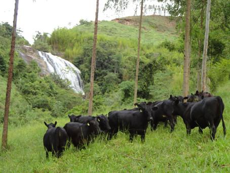 Agricultura e pecuária regenerativa em tempos de coronavírus