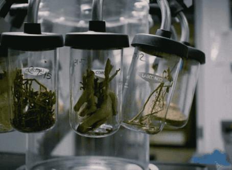 Brightseed e a revolução dos fitonutrientes