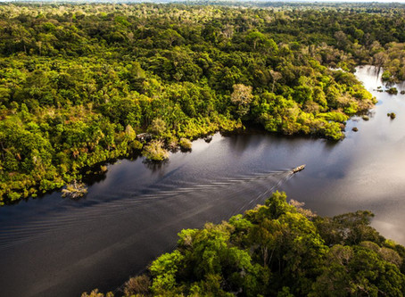 Amazonas e GFI se juntam para atrair investimento no setor de proteínas alternativas