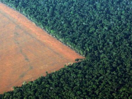 Todos de olho no desmatamento da Amazônia