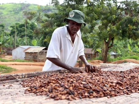 Cargill lança plataforma de dados de sustentabilidade sobre produção de cacau