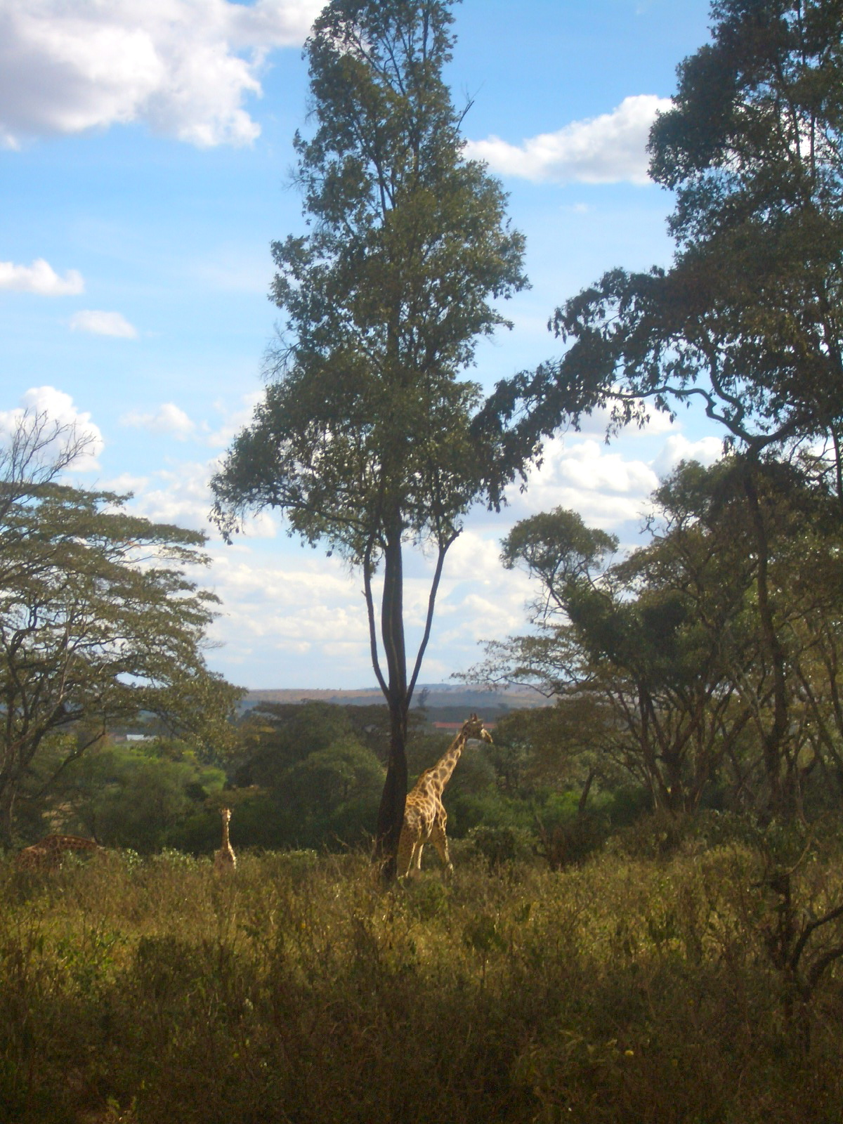 The Giraffe Preserve