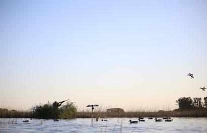 ducks6.jpg