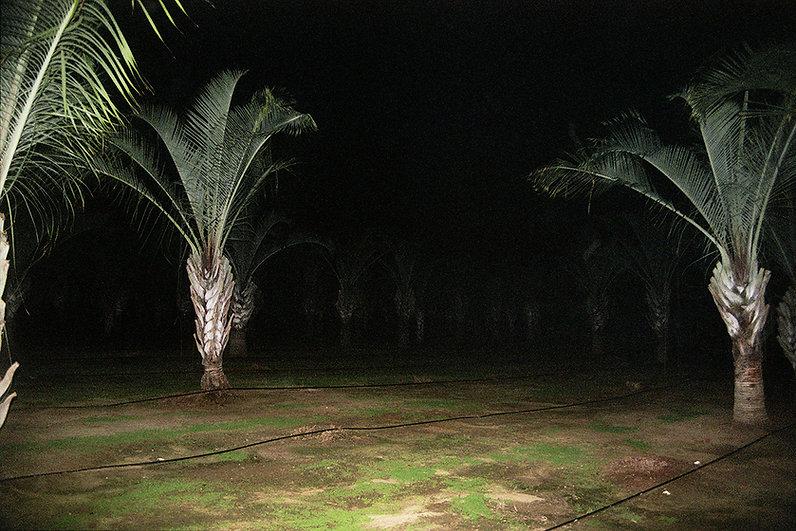 Anna Yam, Habitat, Untitled, 2012 - 54