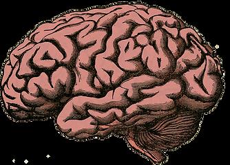 brain-512758_1280.png